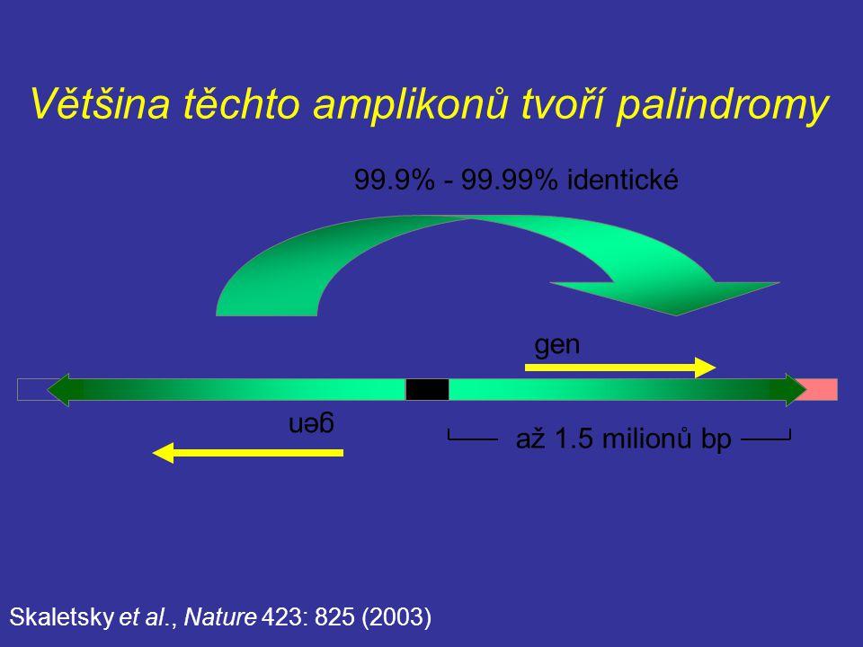 Většina těchto amplikonů tvoří palindromy