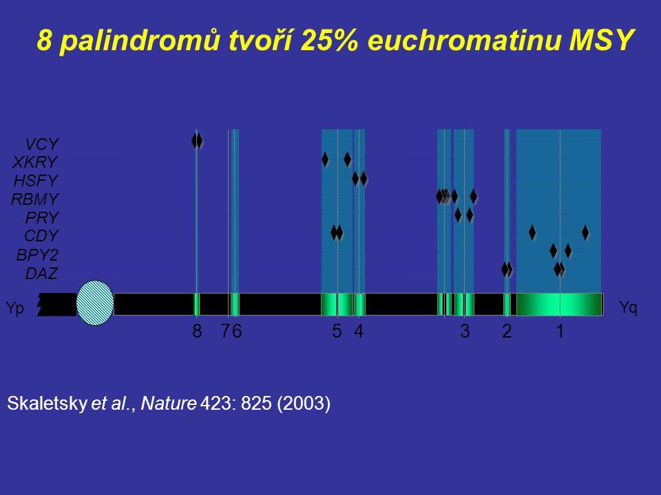 8 palindromů tvoří 25% euchromatinu MSY