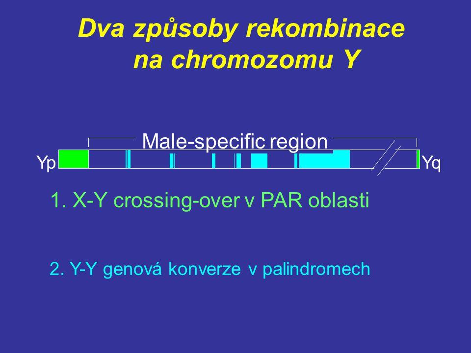 Dva způsoby rekombinace