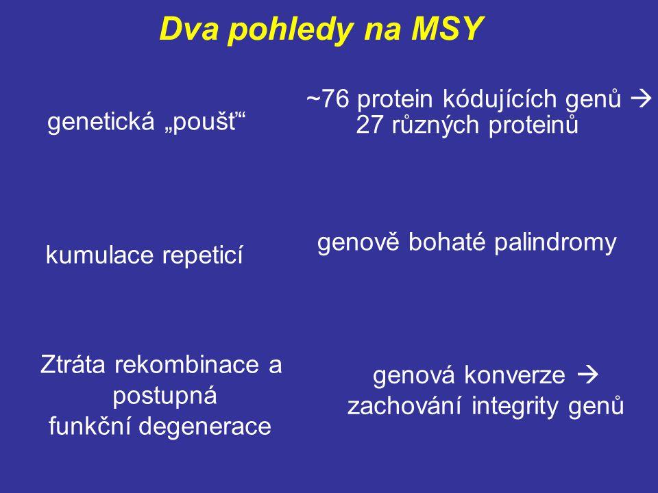 """Dva pohledy na MSY ~76 protein kódujících genů  genetická """"poušť"""