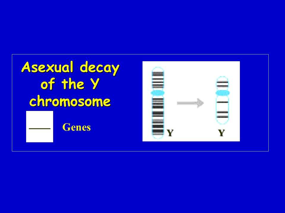 Asexual decay of the Y chromosome