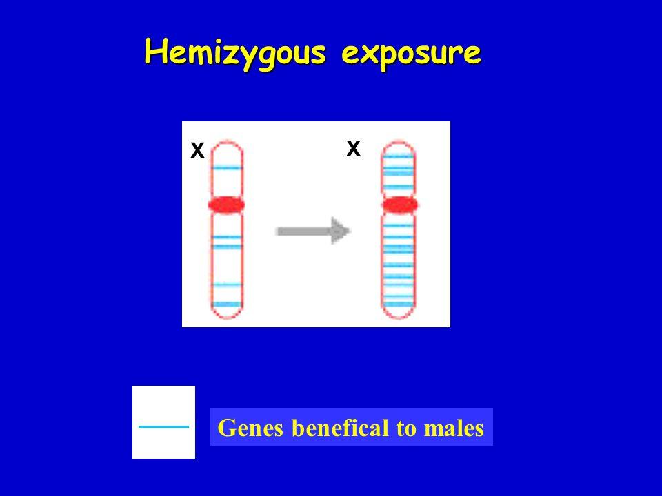 Hemizygous exposure X X ___ Genes benefical to males