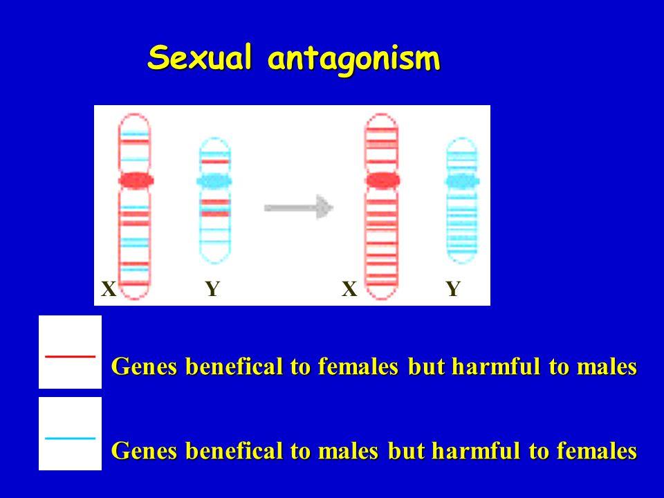Sexual antagonism ___ ___ X Y X Y