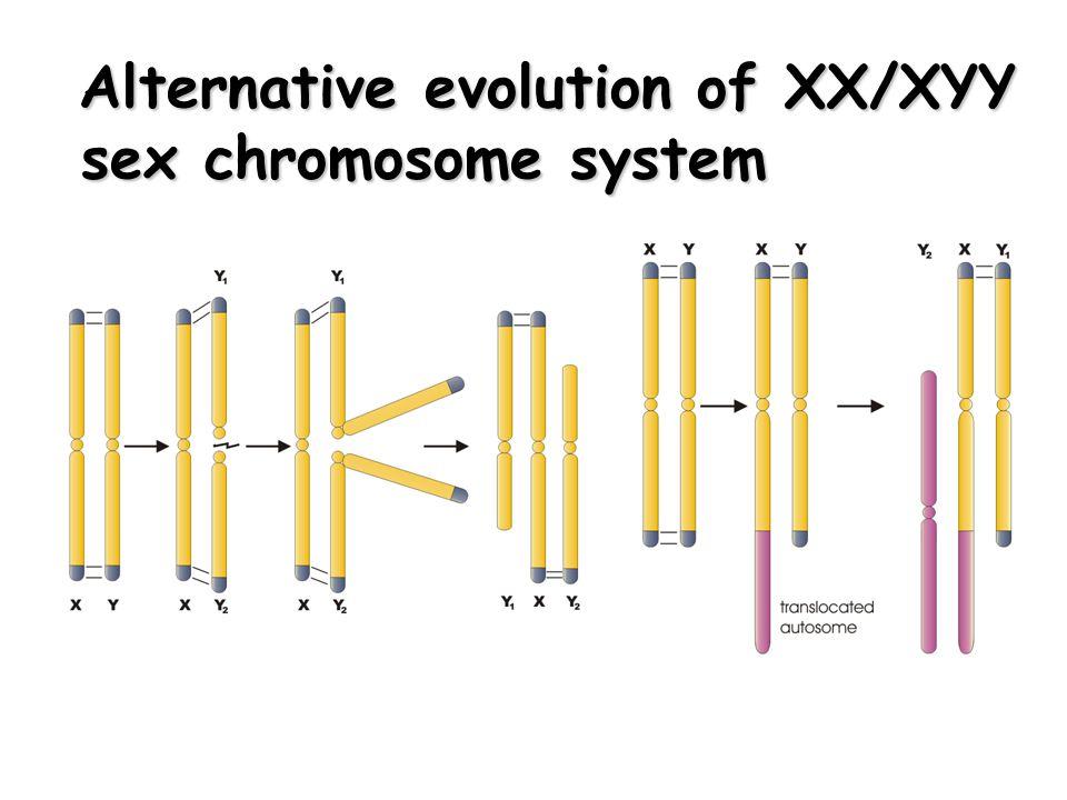 Alternative evolution of XX/XYY