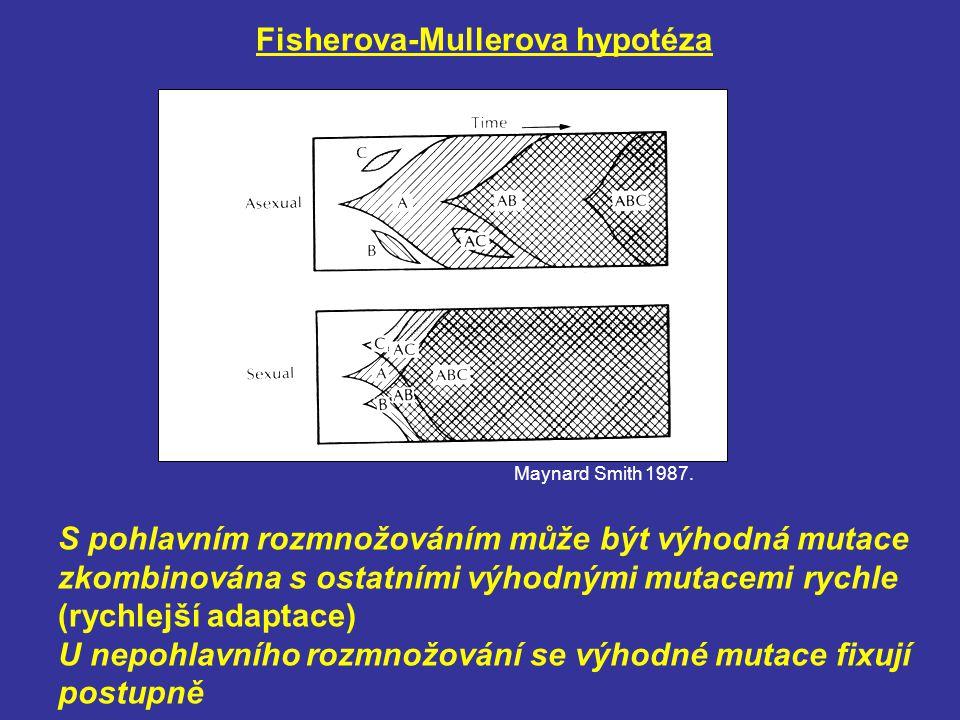 Fisherova-Mullerova hypotéza