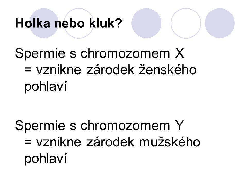 Spermie s chromozomem X = vznikne zárodek ženského pohlaví