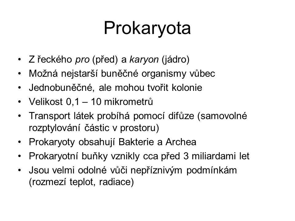 Prokaryota Z řeckého pro (před) a karyon (jádro)