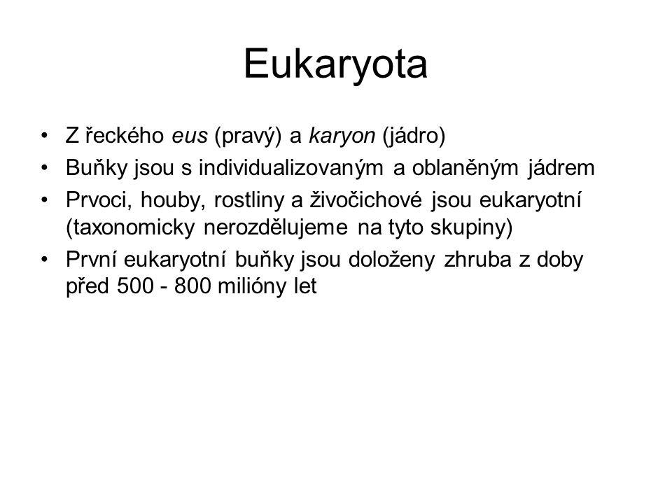 Eukaryota Z řeckého eus (pravý) a karyon (jádro)