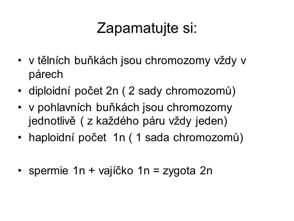 Zapamatujte si: v tělních buňkách jsou chromozomy vždy v párech