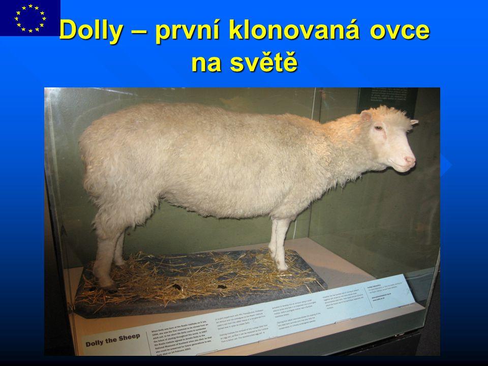 Dolly – první klonovaná ovce na světě