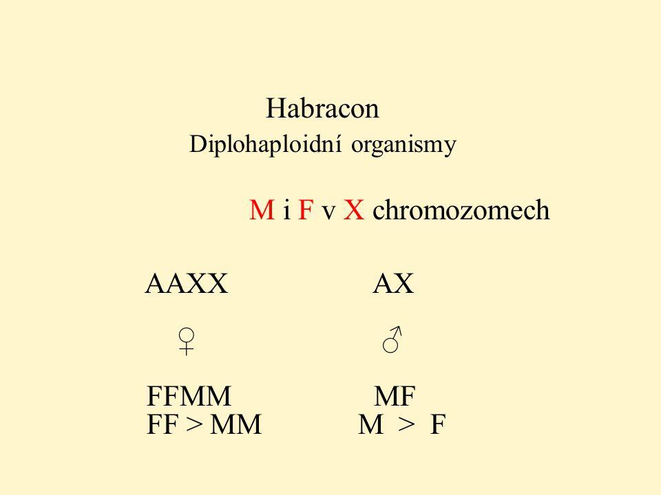 Diplohaploidní organismy