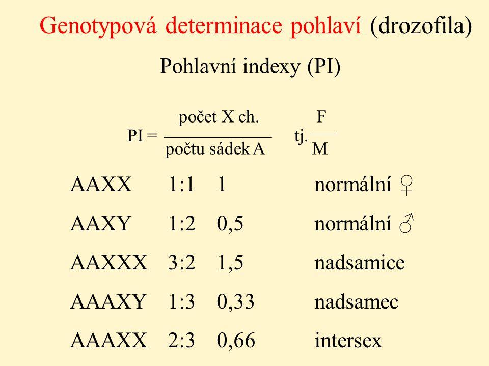 Genotypová determinace pohlaví (drozofila)