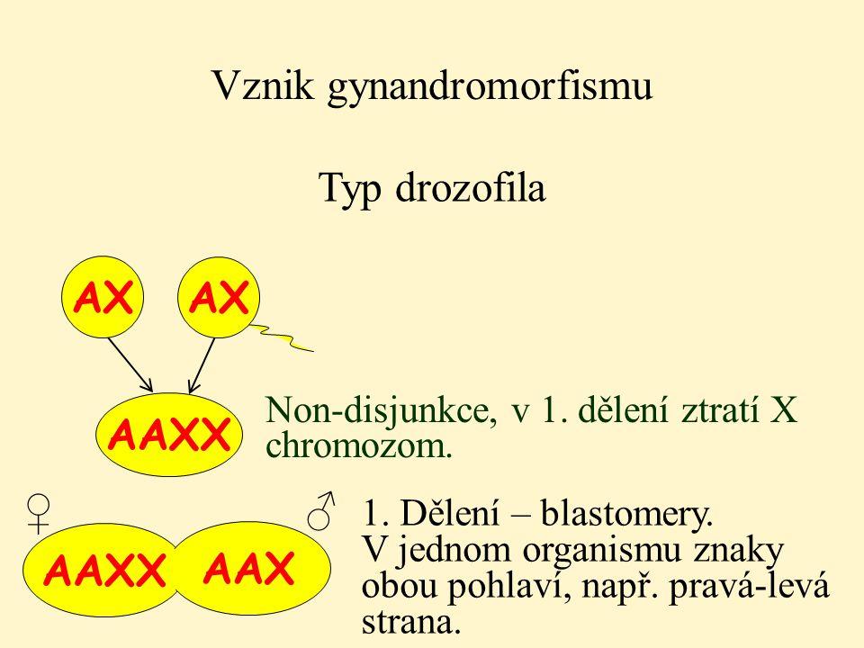 Vznik gynandromorfismu