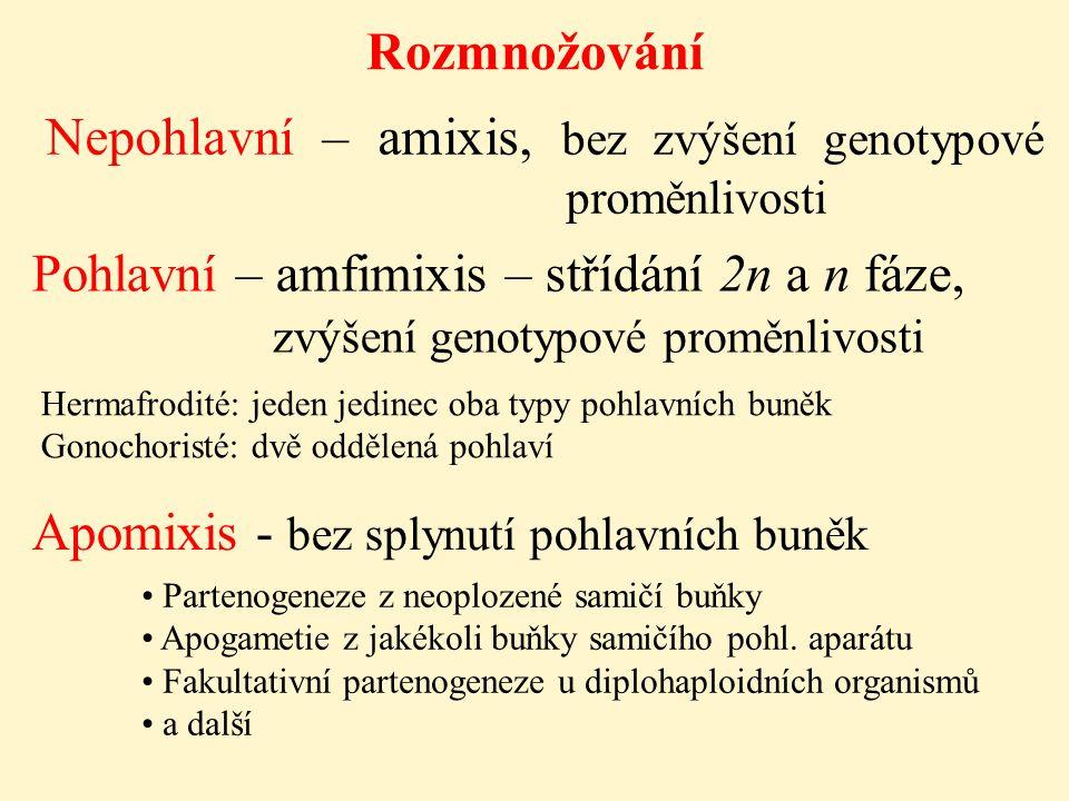 Pohlavní – amfimixis – střídání 2n a n fáze,