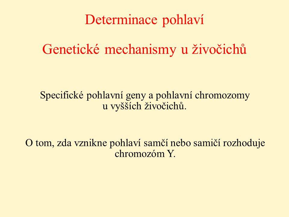 Genetické mechanismy u živočichů