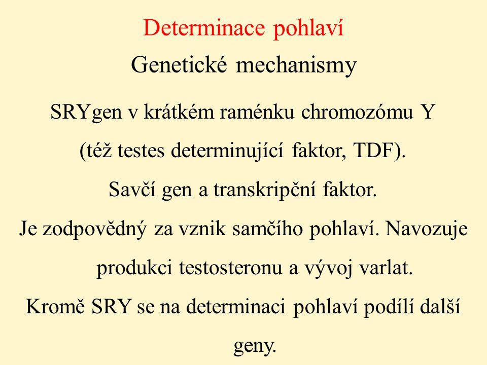 Determinace pohlaví Genetické mechanismy
