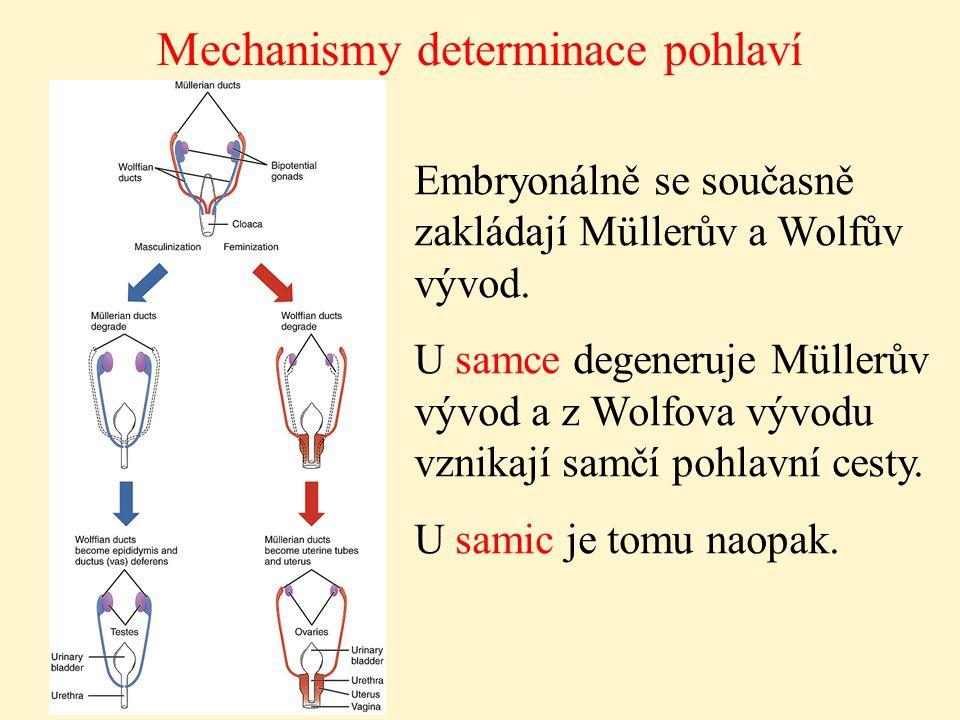 Mechanismy determinace pohlaví