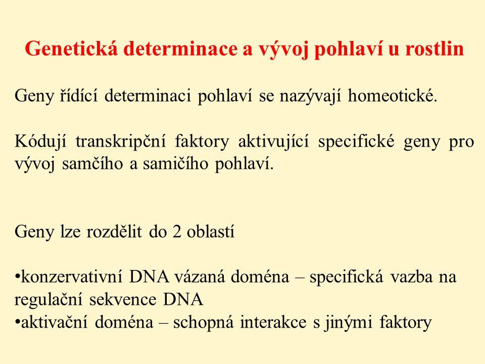 Genetická determinace a vývoj pohlaví u rostlin