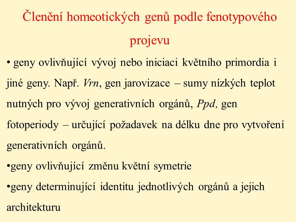 Členění homeotických genů podle fenotypového projevu