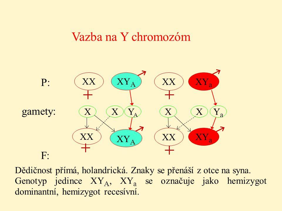 Vazba na Y chromozóm P: gamety: F: XX XYA XX XYa X X YA X X Ya XX XYA