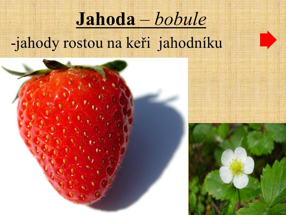 Jahoda – bobule -jahody rostou na keři jahodníku