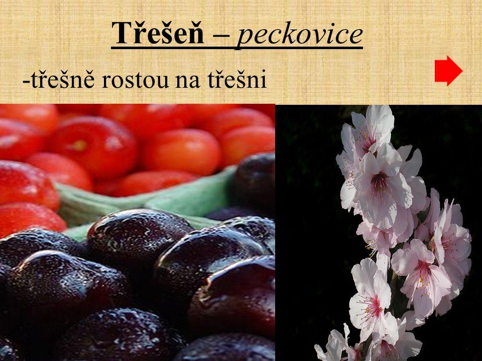 Třešeň – peckovice -třešně rostou na třešni