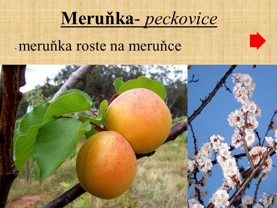 Meruňka- peckovice - meruňka roste na meruňce