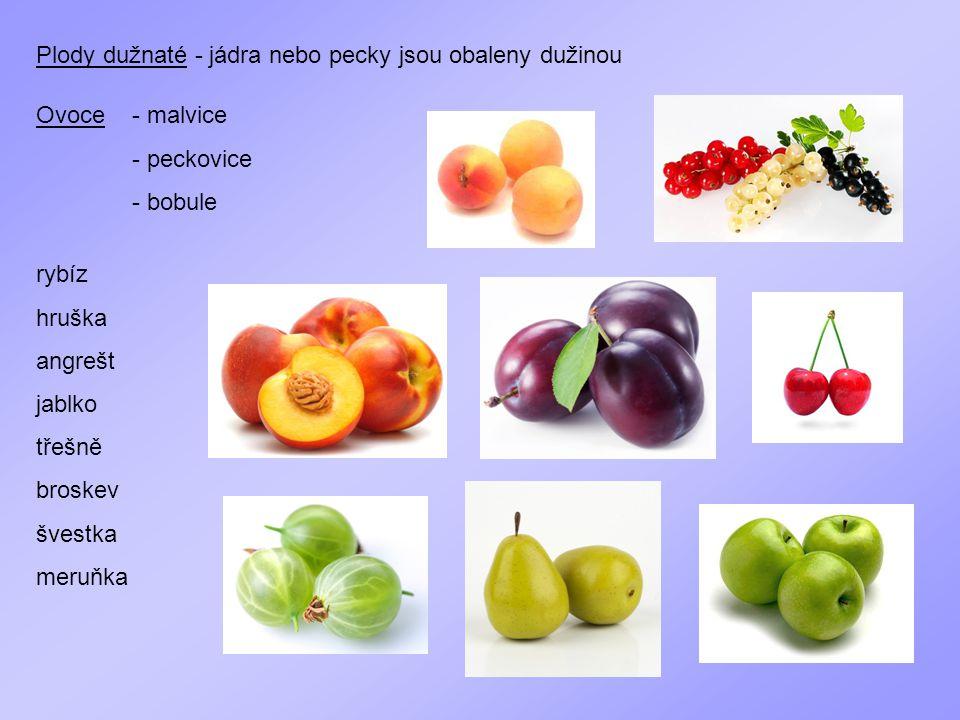 Plody dužnaté - jádra nebo pecky jsou obaleny dužinou
