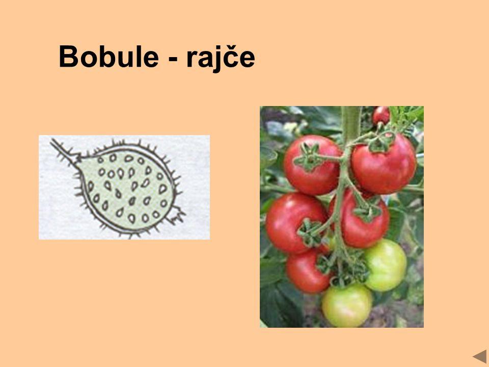 Bobule - rajče