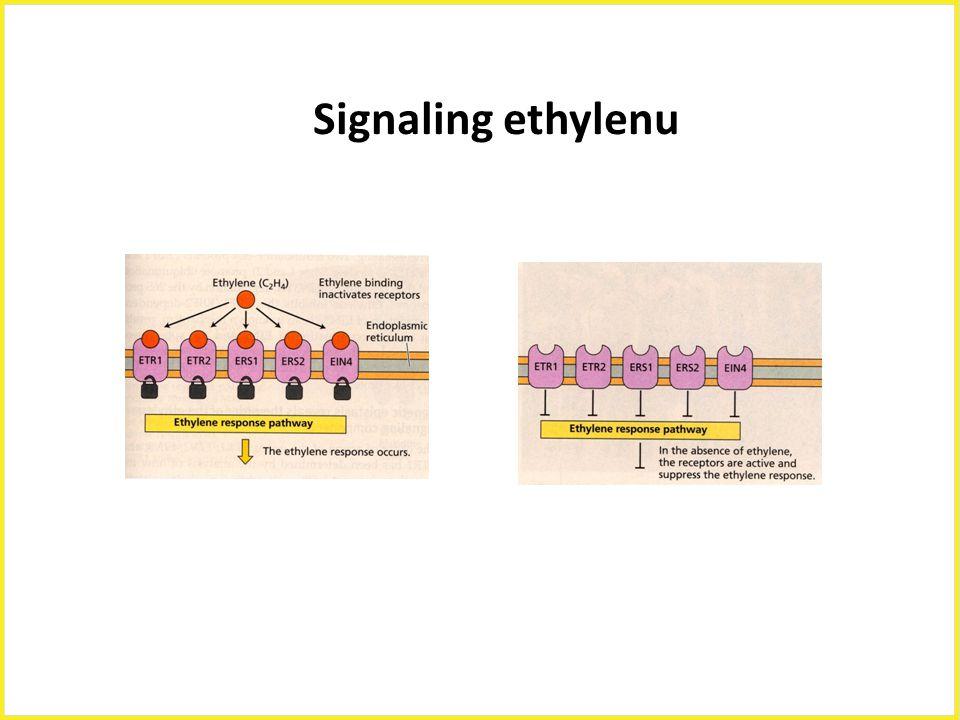 Signaling ethylenu Signaling ethylenu