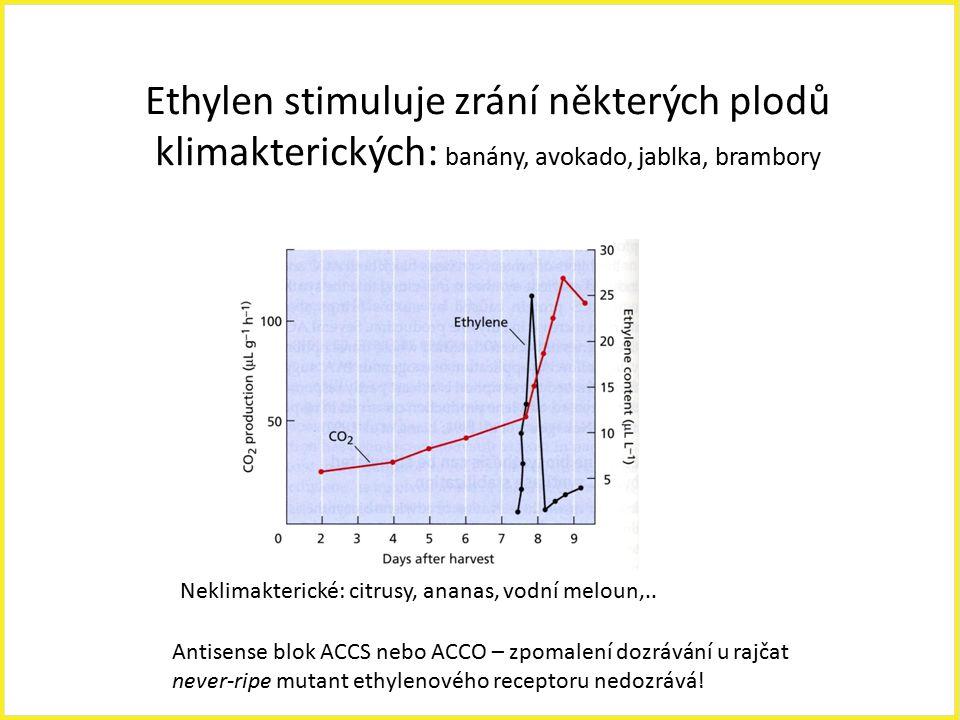 Ethylen stimuluje zrání některých plodů klimakterických: banány, avokado, jablka, brambory