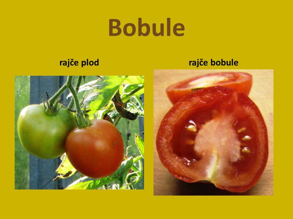 Bobule rajče plod rajče bobule