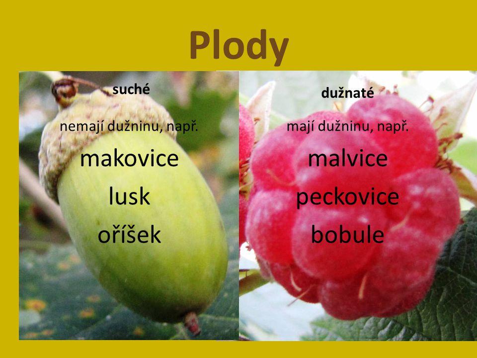Plody makovice lusk oříšek malvice peckovice bobule suché dužnaté