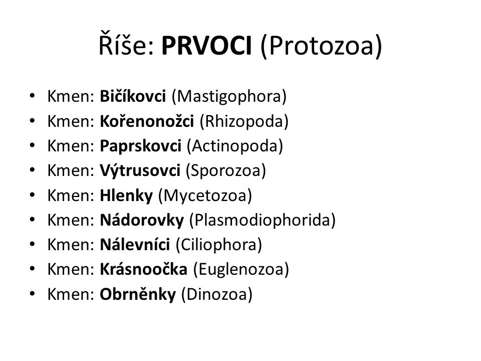 Říše: PRVOCI (Protozoa)