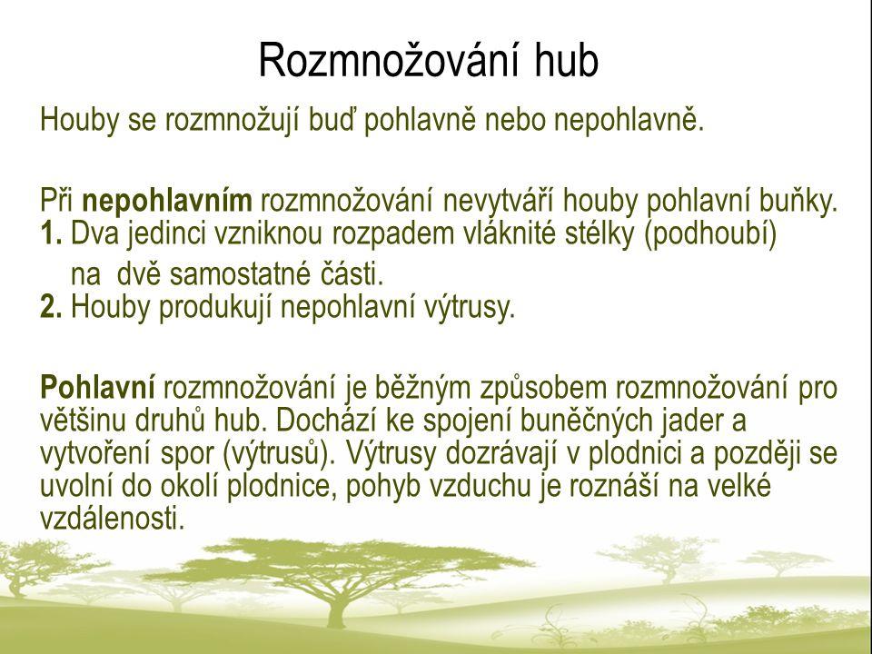 Rozmnožování hub Houby se rozmnožují buď pohlavně nebo nepohlavně.