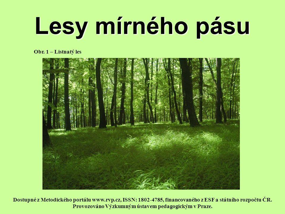 Lesy mírného pásu Obr. 1 – Listnatý les