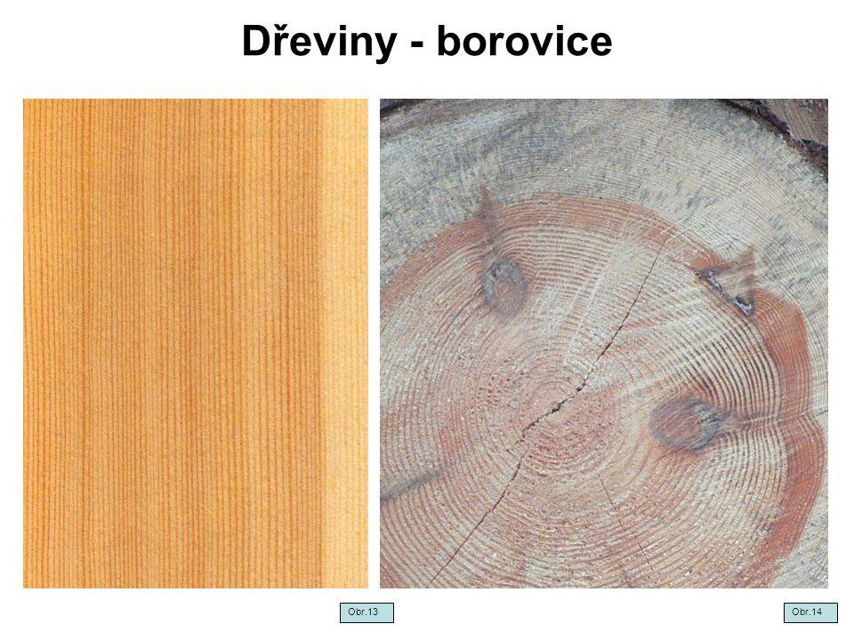 Dřeviny - borovice Obr.13 Obr.14