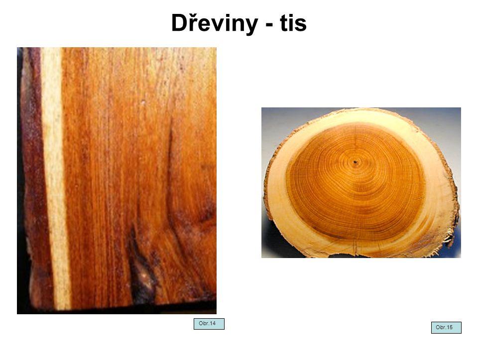 Dřeviny - tis Obr.14 Obr.15