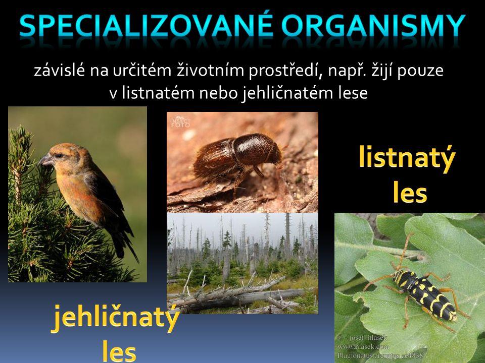 specializované organismy