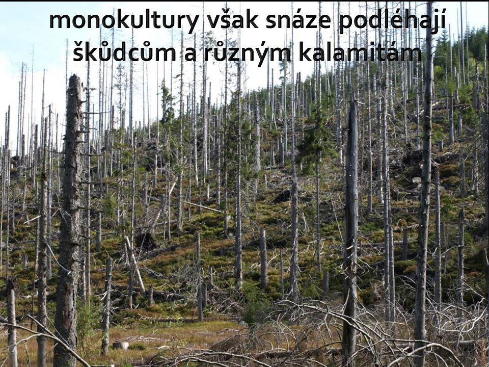 monokultury však snáze podléhají škůdcům a různým kalamitám