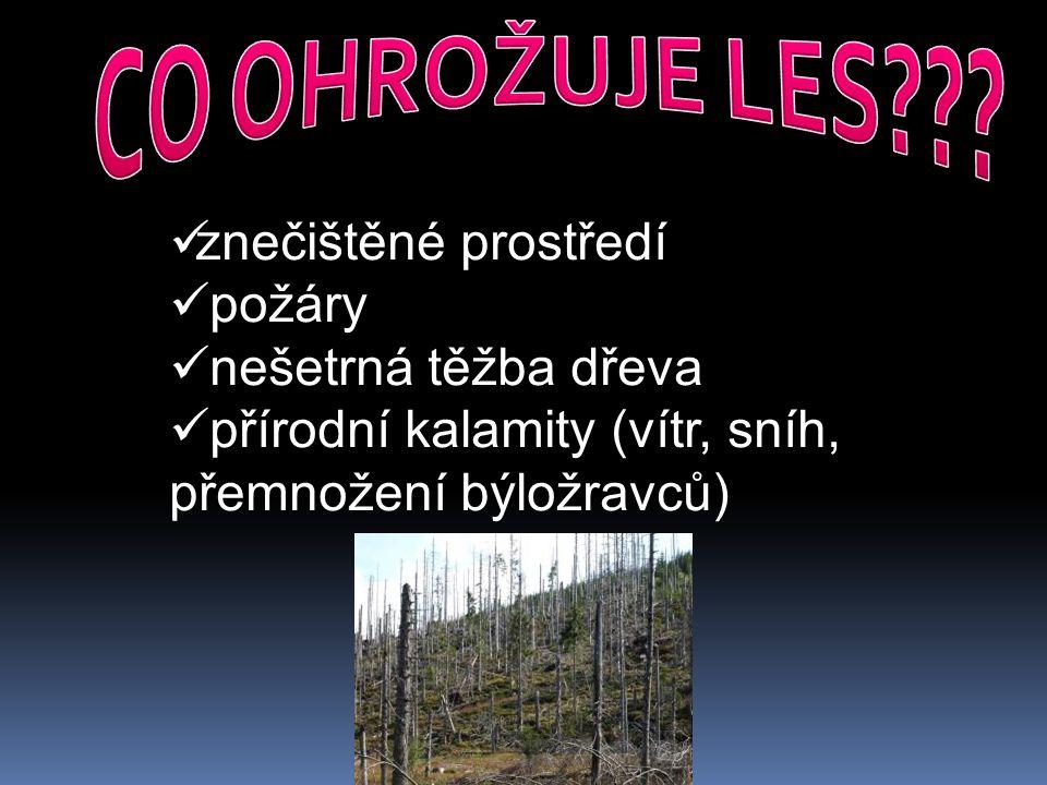 CO OHROŽUJE LES znečištěné prostředí požáry nešetrná těžba dřeva