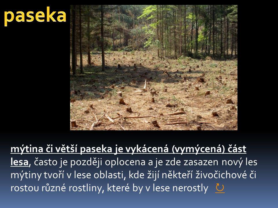paseka mýtina či větší paseka je vykácená (vymýcená) část lesa, často je později oplocena a je zde zasazen nový les.