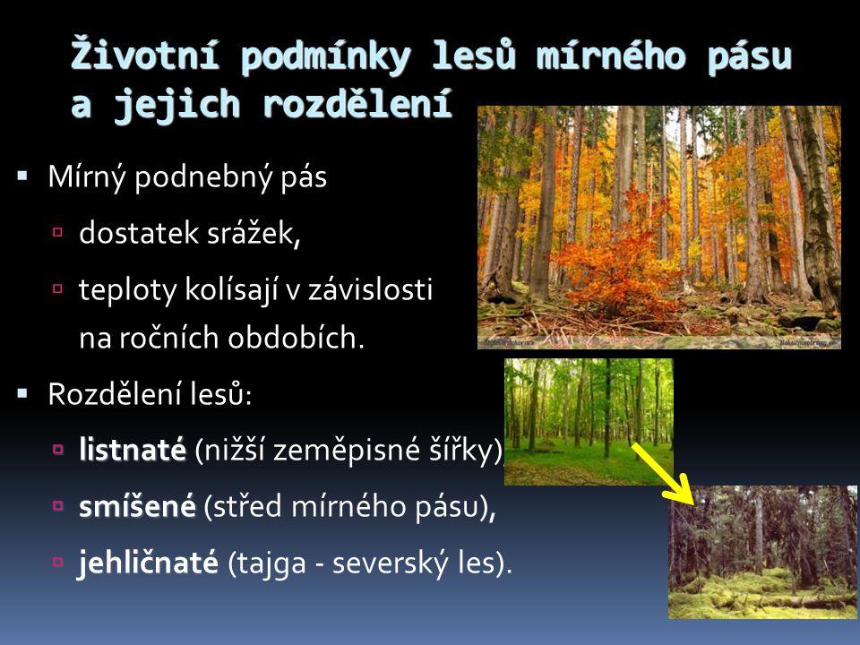 Životní podmínky lesů mírného pásu a jejich rozdělení