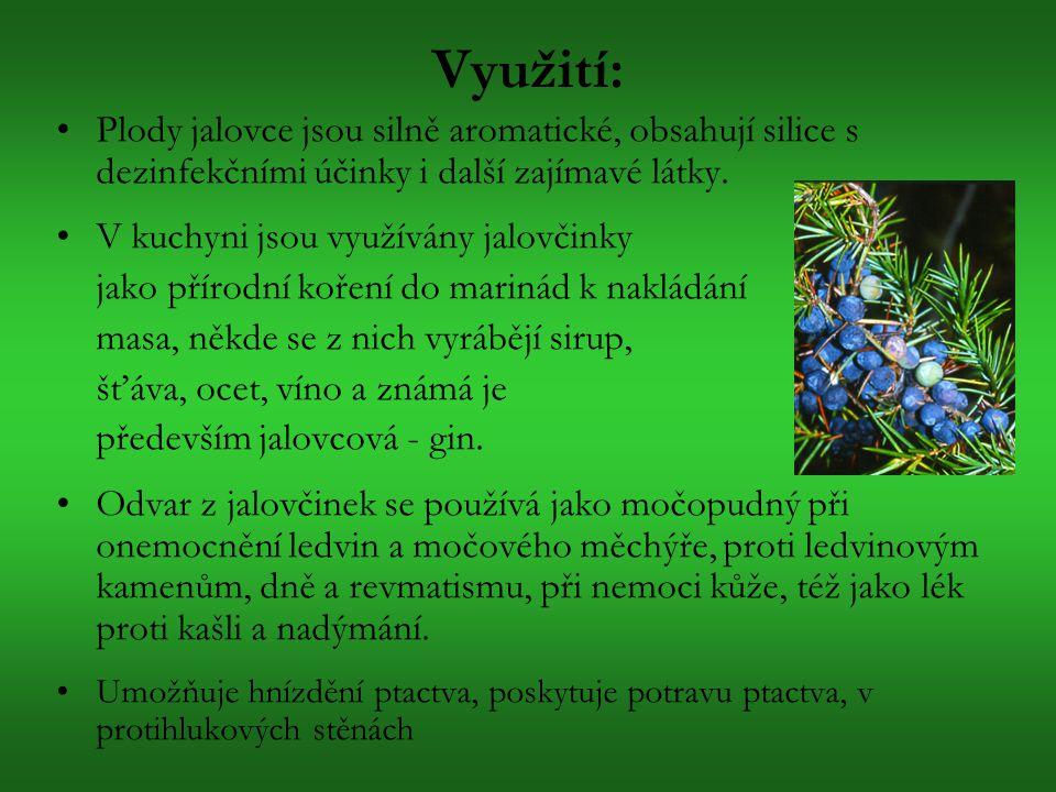 Využití: Plody jalovce jsou silně aromatické, obsahují silice s dezinfekčními účinky i další zajímavé látky.