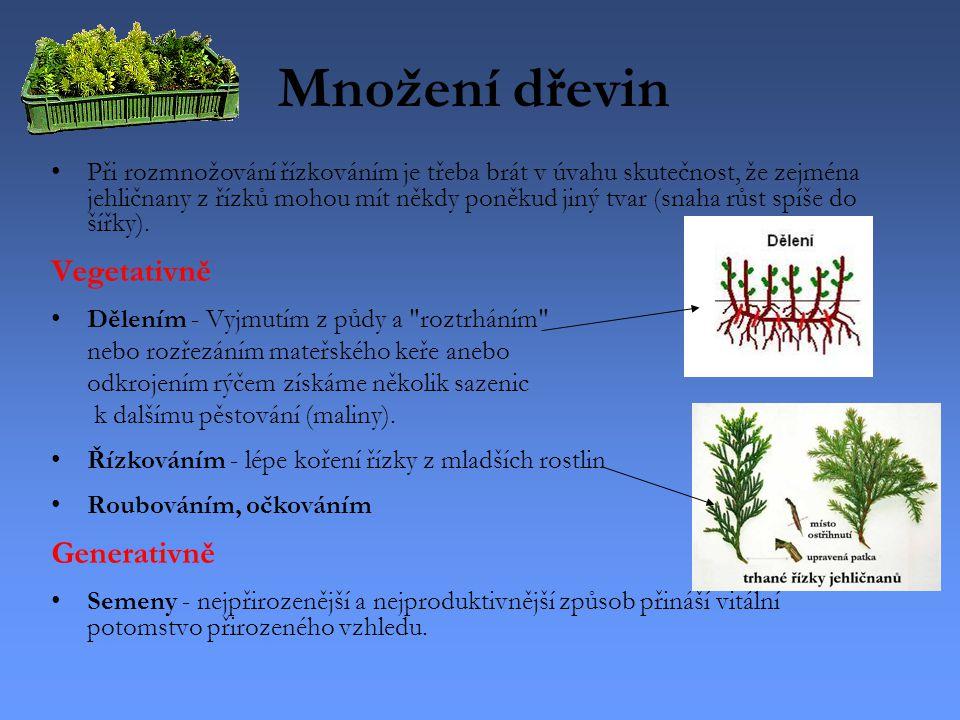 Množení dřevin Vegetativně Generativně