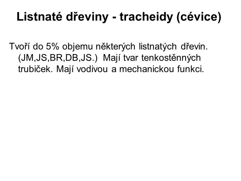 Listnaté dřeviny - tracheidy (cévice)