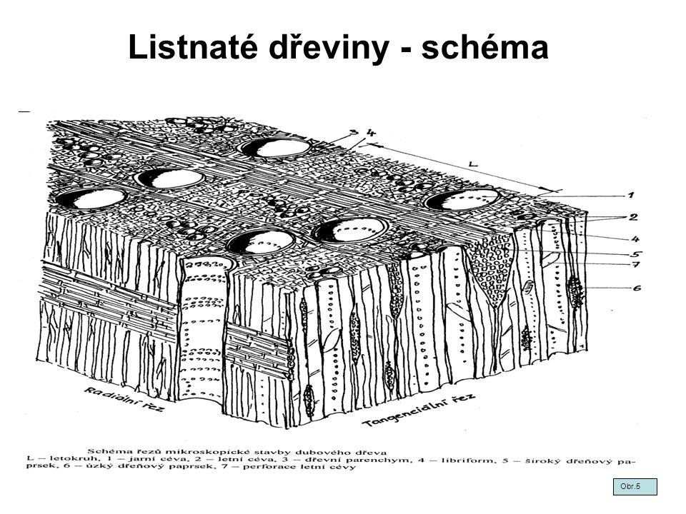 Listnaté dřeviny - schéma