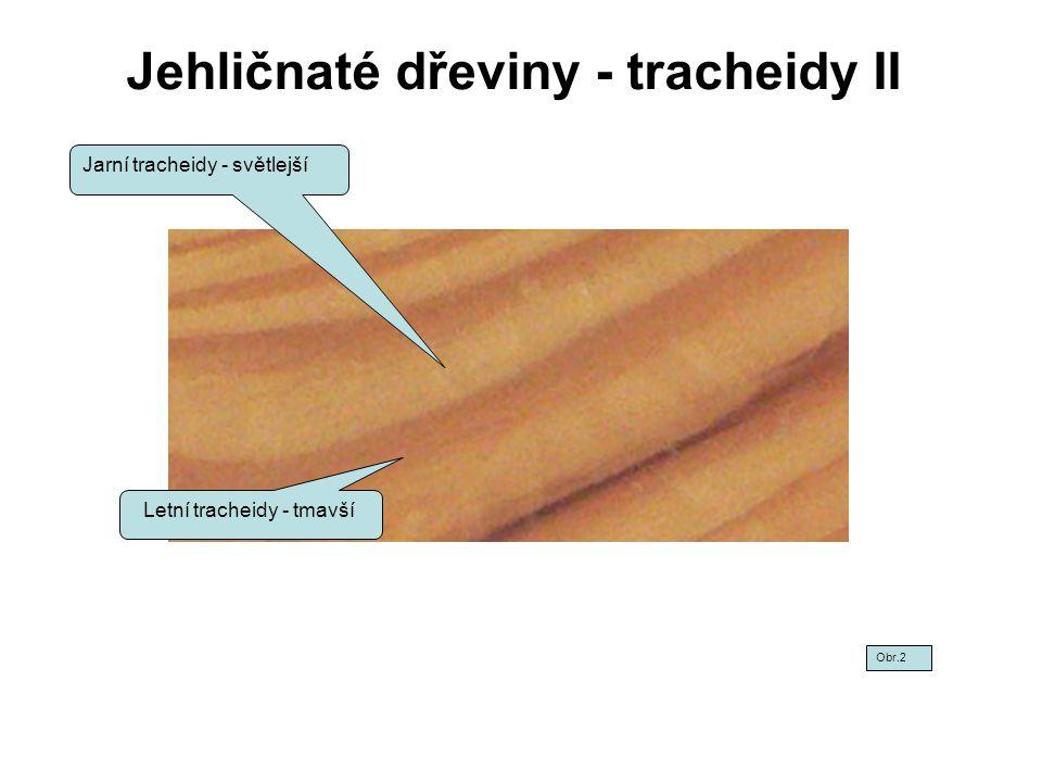 Jehličnaté dřeviny - tracheidy II