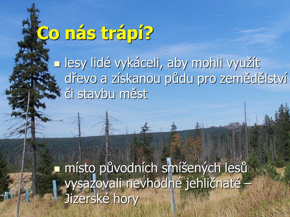 Co nás trápí lesy lidé vykáceli, aby mohli využít dřevo a získanou půdu pro zemědělství či stavbu měst.