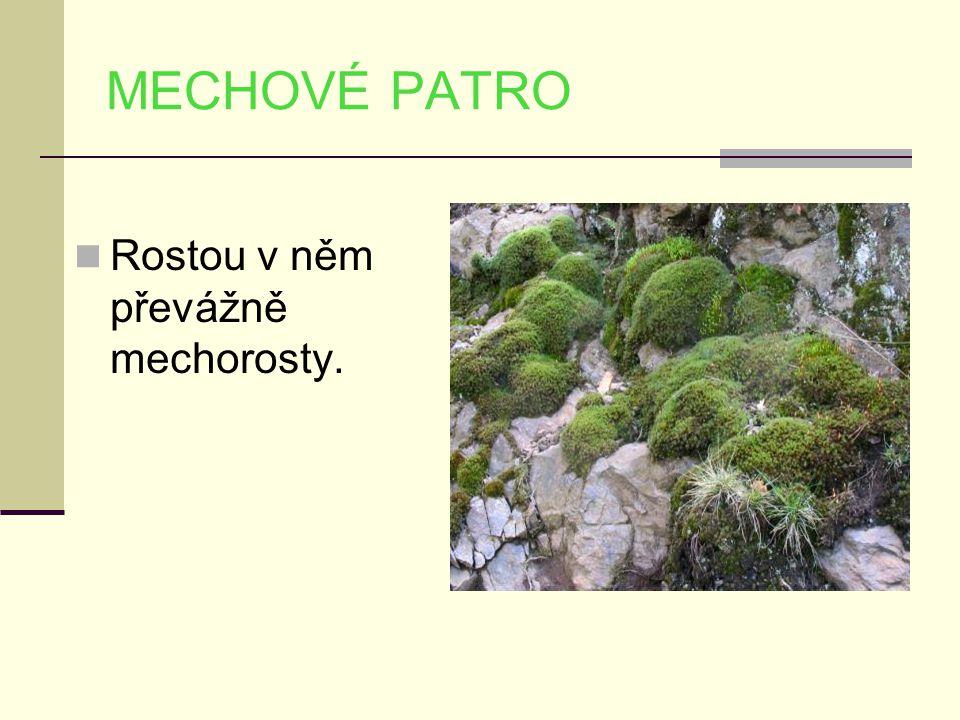 MECHOVÉ PATRO Rostou v něm převážně mechorosty.
